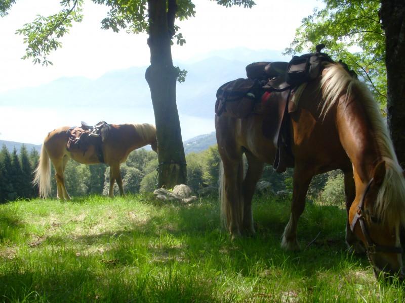 Reiten - Pferdetrekking