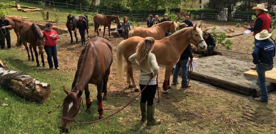 BADI FARM HORSE PARK 05